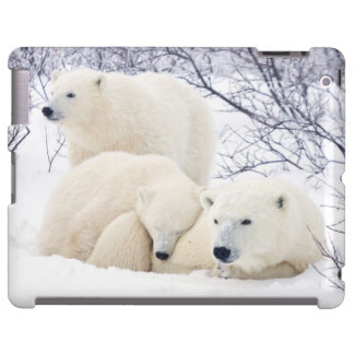 Polar Bears female and Two cubs 3