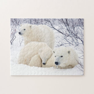 Polar Bears female and Two cubs 3 Puzzle