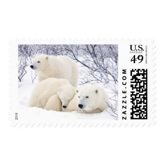 Polar Bears female and Two cubs 3 Stamp
