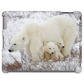 Polar Bears female and Two cubs