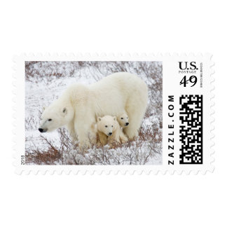 Polar Bears female and Two cubs Postage Stamp