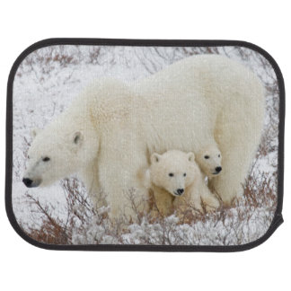 Polar Bears female and Two cubs Floor Mat