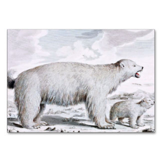 Polar Bears Old Illustration Card