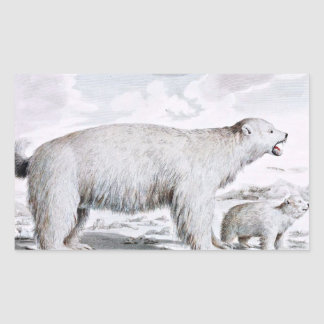 Polar Bears Old Illustration Rectangular Sticker