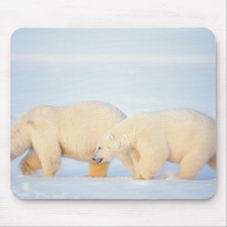 Polar bears on frozen Arctic, 1002 coastal Mouse Pad