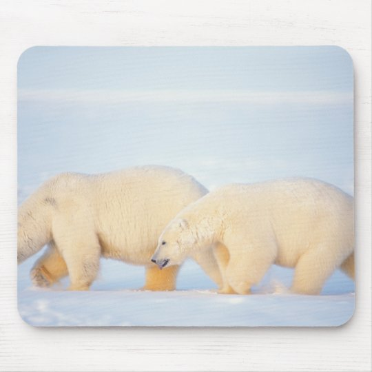 Polar bears on frozen Arctic, 1002 coastal Mouse Pad