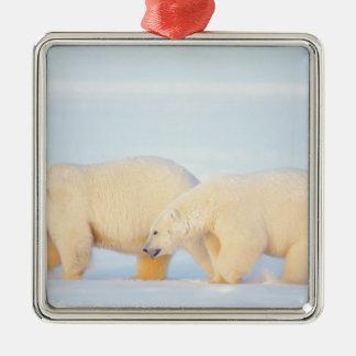 Polar bears on frozen Arctic, 1002 coastal Square Metal Christmas Ornament