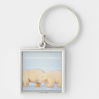 Polar bears on frozen Arctic, 1002 coastal Silver-Colored Square Keychain