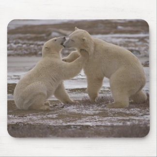 Polar bears playing  523 mouse pad