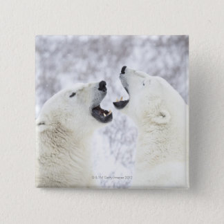 Polar Bears playing in the snow. Button