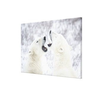 Polar Bears playing in the snow Canvas Print