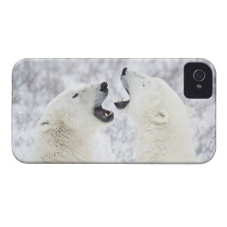 Polar Bears playing in the snow. Case-Mate iPhone 4 Cases