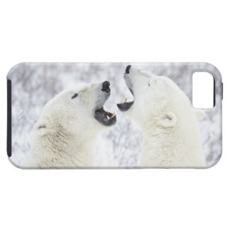 Polar Bears playing in the snow. iPhone SE/5/5s Case