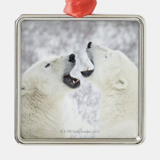 Polar Bears playing in the snow Metal Ornament