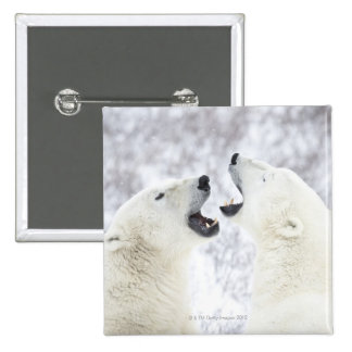 Polar Bears playing in the snow Pinback Button
