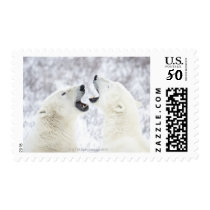 Polar Bears playing in the snow. Postage