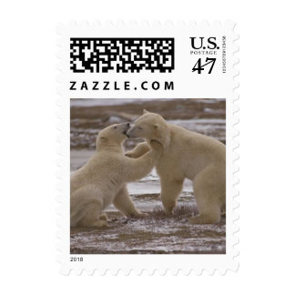 Polar bears postage 523