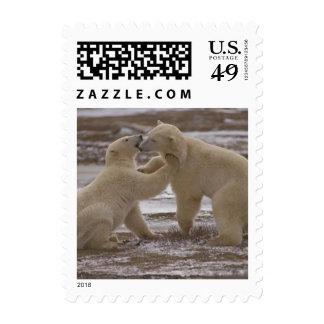 Polar bears postage 523