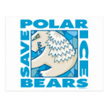 Polar Bears Postcard