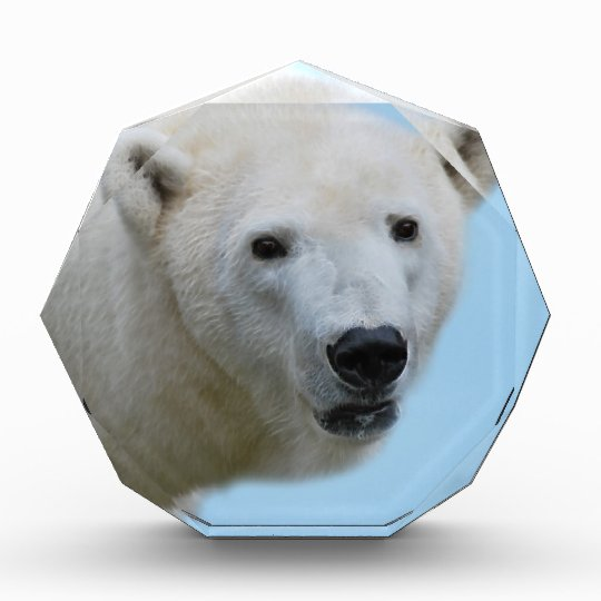 Polar bears profile award