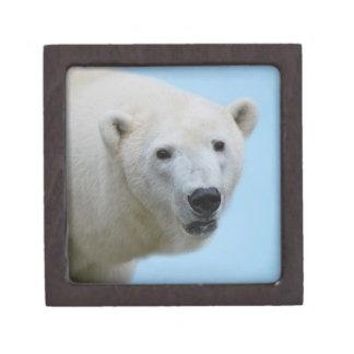 Polar bears profile premium keepsake box