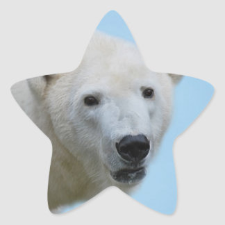Polar bears profile star sticker