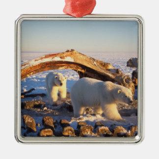 Polar bears scavenging on a bowhead whale square metal christmas ornament