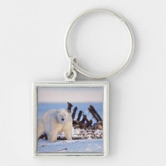 Polar bears scavenging on baleen whale bones, Silver-Colored square keychain
