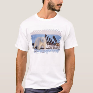 Polar bears scavenging on baleen whale bones, T-Shirt