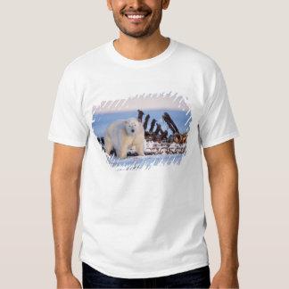 Polar bears scavenging on baleen whale bones, tee shirt