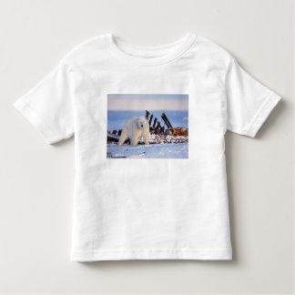 Polar bears scavenging on baleen whale bones, toddler t-shirt