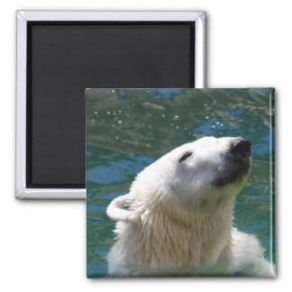 Polar bears smile magnet