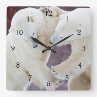 Polar Bears sparring 2 Square Wall Clock