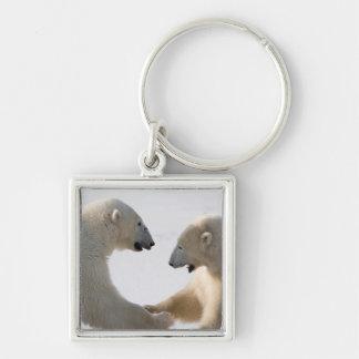 Polar Bears sparring Keychain