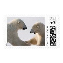 Polar Bears sparring Postage