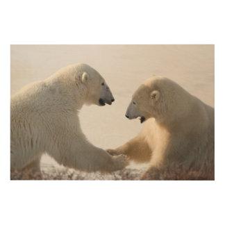 Polar Bears sparring Wood Print