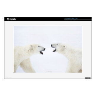 "Polar Bears standing on snow after playing 15"" Laptop Skins"