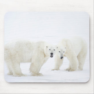 Polar Bears standing on snow after playing 2 Mouse Pad