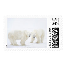 Polar Bears standing on snow after playing 2 Postage