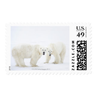 Polar Bears standing on snow after playing 2 Postage Stamp