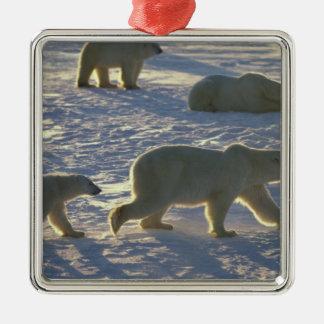Polar bears Ursus maritimus) Two females, Metal Ornament