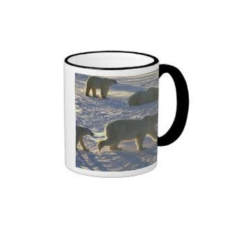 Polar bears Ursus maritimus) Two females, Coffee Mug