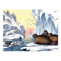 Polar Bears, Walrus, And Seals Postcard