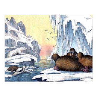 Polar Bears, Walrus, And Seals Postcard