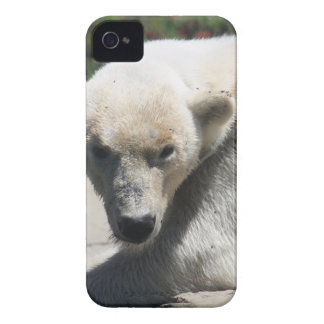 Polar Beer iPhone 4 Cover