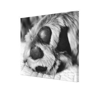 Polar Paws Canvas Print