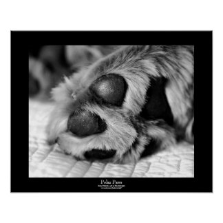 Polar Paws Dog Black Border Poster