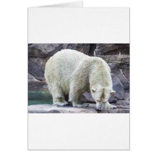 Polar Power Greeting Card