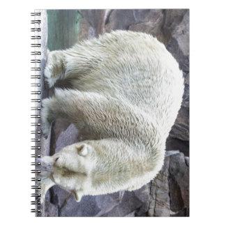 Polar Power Notebook