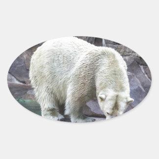 Polar Power Oval Sticker